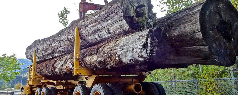 Últimos días para solicitar las ayudas para empresas transformadoras del sector forestal