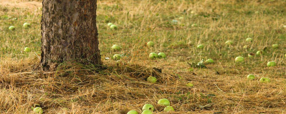 4 millones de euros en ayudas para productores de huerta, frutales y patata