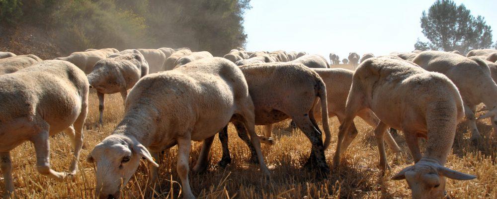 Decálogo de los pastores para la prevención de los incendios forestales