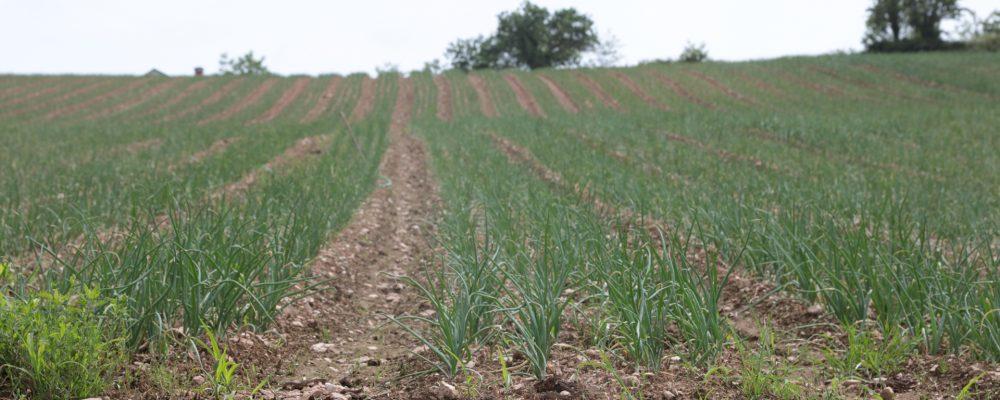 Beneficios de la producción integrada: para el productor, el consumidor y el medio ambiente