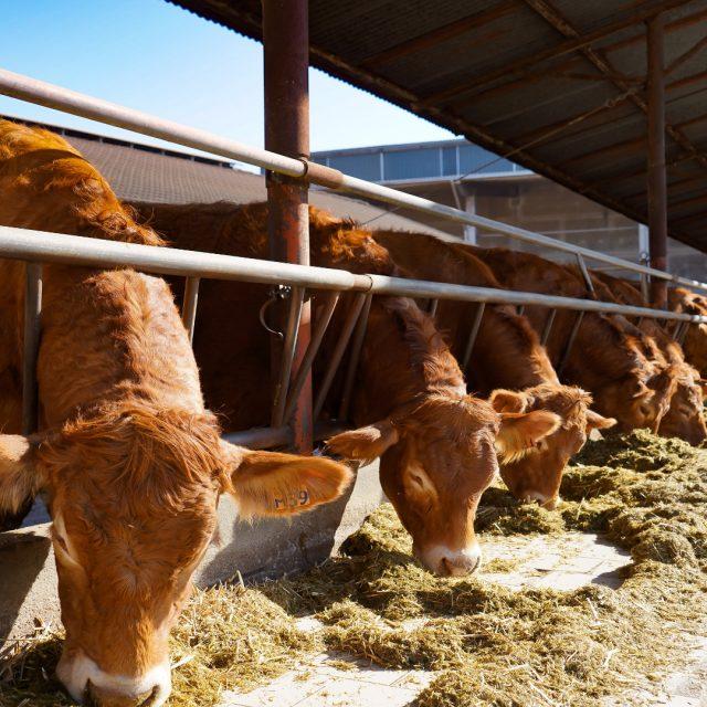 Unión Fenosa Distribución le pide a un ganadero de Portomarín 54.000€ por aumentar la potencia
