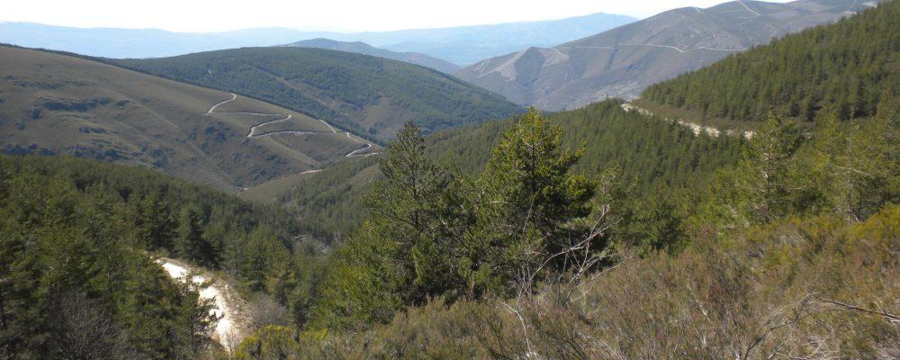27 patrullas de las Fuerzas Armadas vigilan el monte gallego