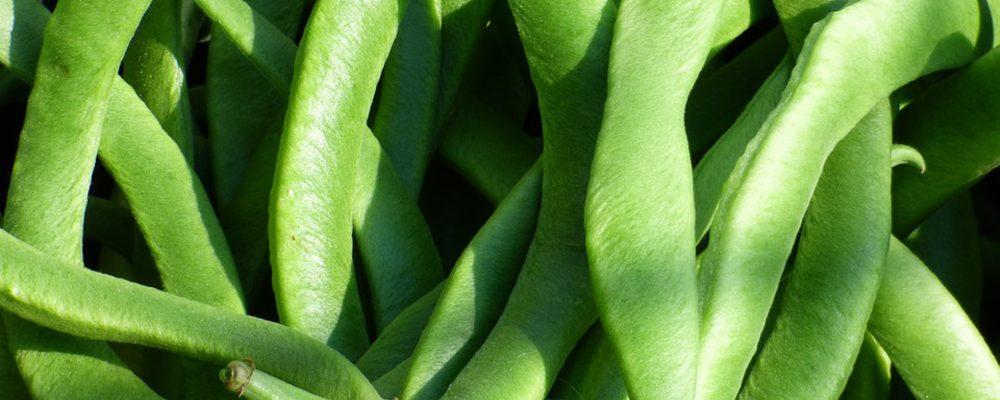 Cómo elegir y conservar las judías verdes