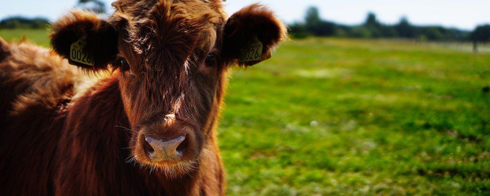 Cómo movilizar al ganado de forma efectiva