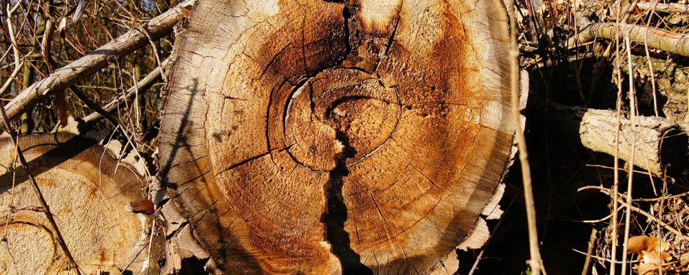 Más de tres millones de toneladas de madera afectada por los incendios