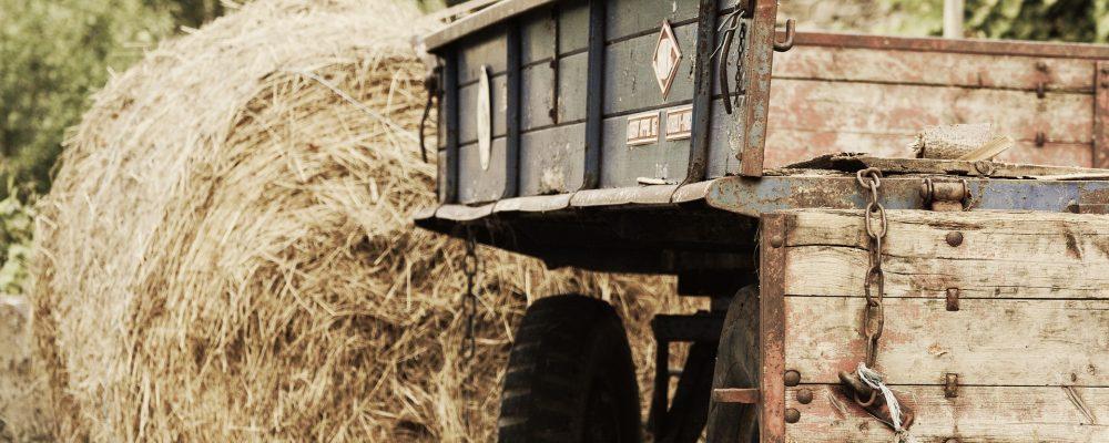 Medio Rural destinará 6 millones de euros a instalaciones y equipamientos de régimen asociativo