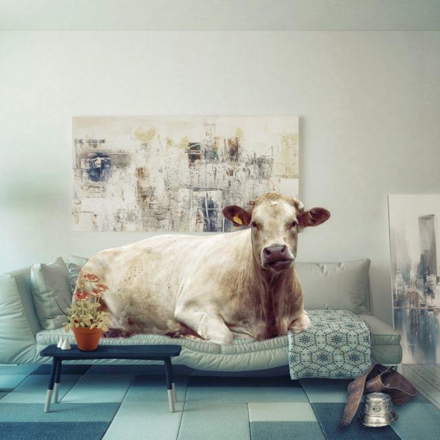 Las vacas que más producen no son las que más comen, sino las que más descansan