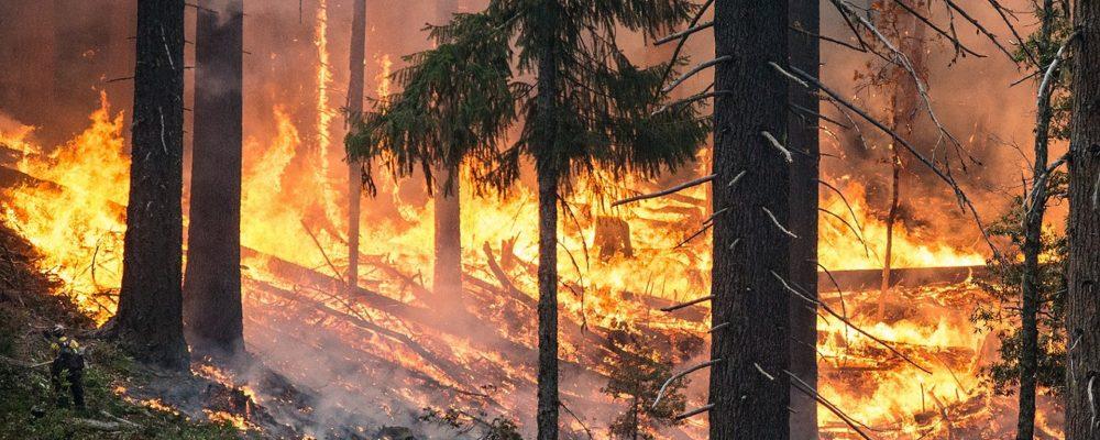 Errores del incendio de Portugal que deben ser estudiados