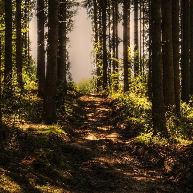 La importancia de la reforestación