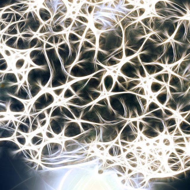 Hasta los 90 años el cerebro produce neuronas