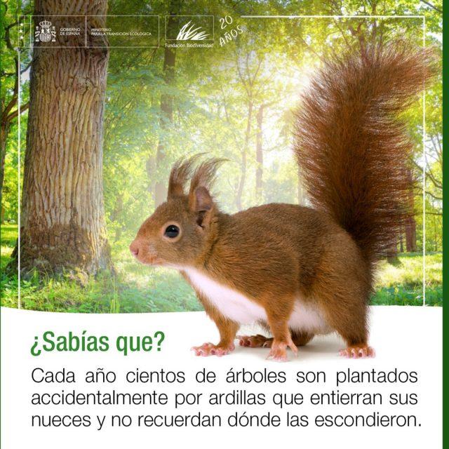 Las ardillas