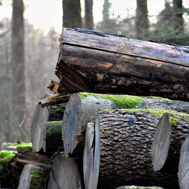 Nuevas ayudas para la compra de maquinaria forestal