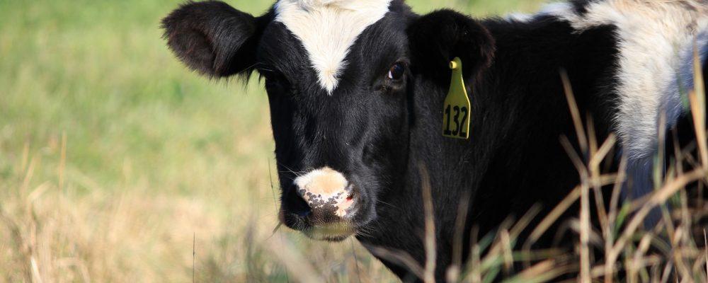 Reducciones fiscales para agricultores y ganaderos