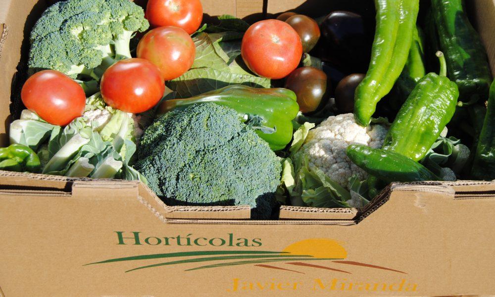 esta-navidad-apuesta-por-un-regalo-saludable-cesta-de-verduras-y-hortalizas-1920