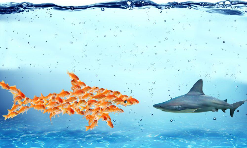 tiburon-proceso-cooperativo
