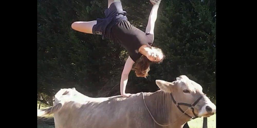 Cuando una vaca se cree un caballo