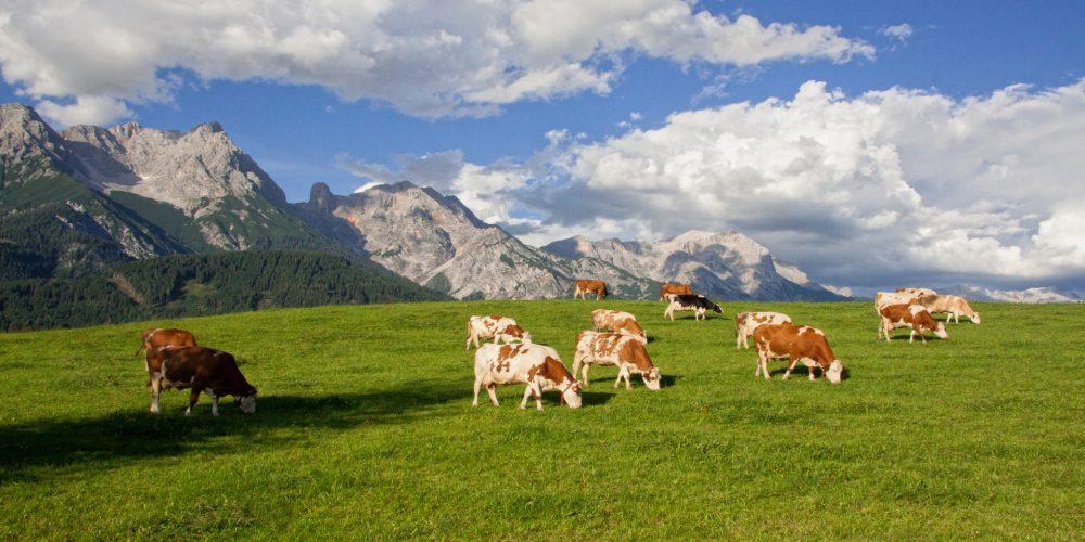 Para el 2018 la leche de pastoreo
