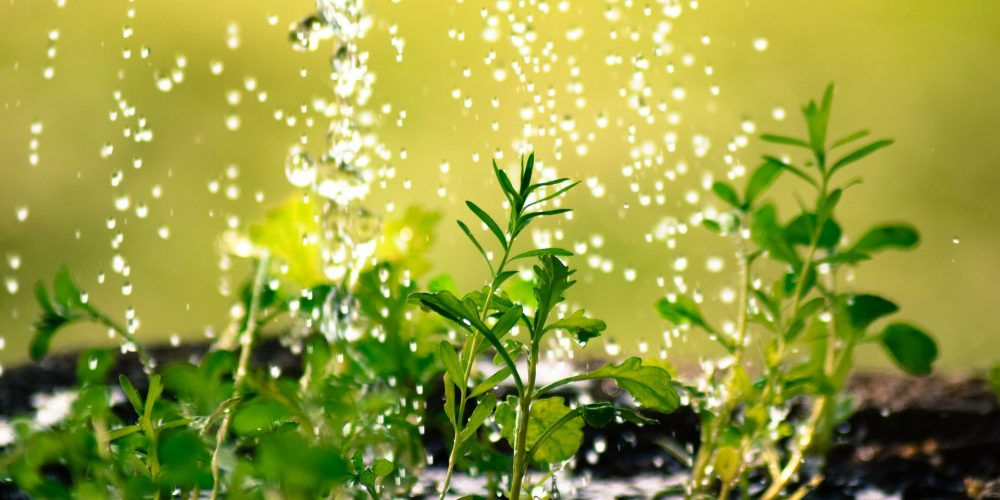 Ahorrar en la agricultura: uso de la orina como fertilizante