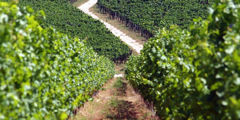 La siniestralidad agrícola eleva las indemnizaciones a 470 millones de euros