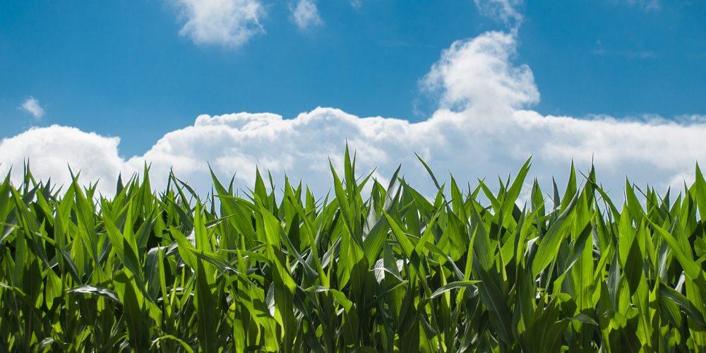 Objetivo: multiplicar las especies vegetales autóctonas