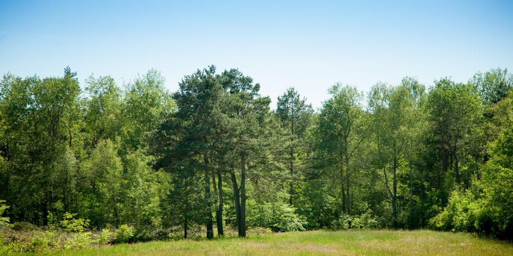 Medio Rural destinará cuatro millones para proyectos de ordenación de montes