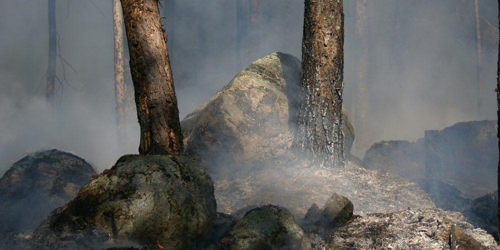 Hasta el 30 de noviembre para solicitar las ayudas por los daños de los incendios