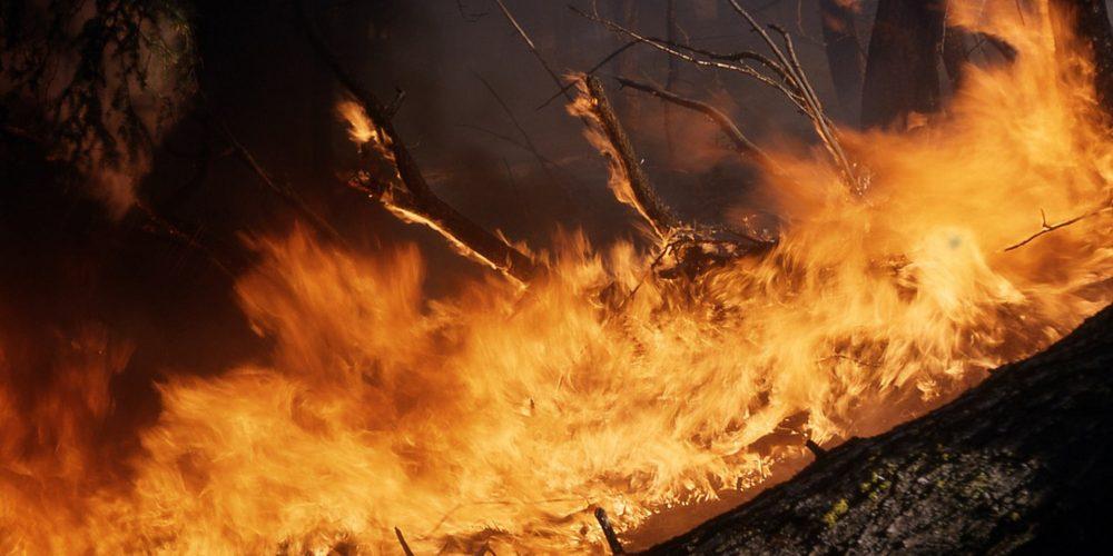Tragedia forestal en Galicia: más de 200 incendios y más de 15.000 hectáreas quemadas