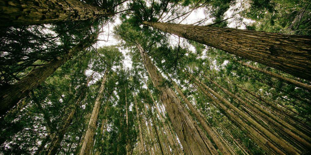 Convocado el I Premio al Proyecto Innovador Forestal
