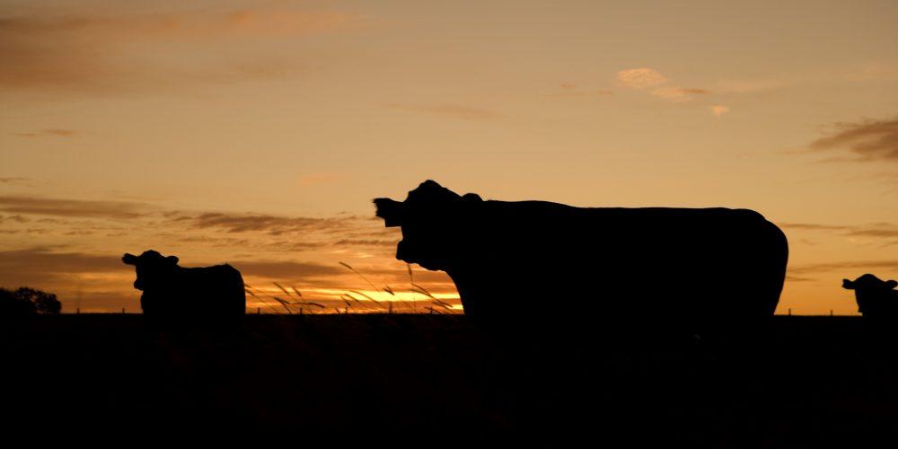 El 30% de las sanciones de la cadena alimentaria son para la industria láctea