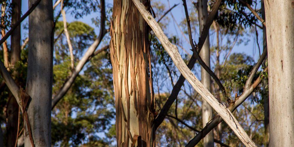 La Asociación Forestal de Galicia alerta sobre la pérdida de rentabilidad del monte