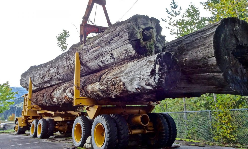 ultimos-dias-para-solicitar-ayudas-empresas-transformadoras-sector-forestal-1920