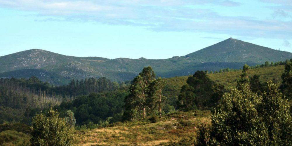 A partir del 2020 será obligatorio tener planes de ordenación en el monte gallego