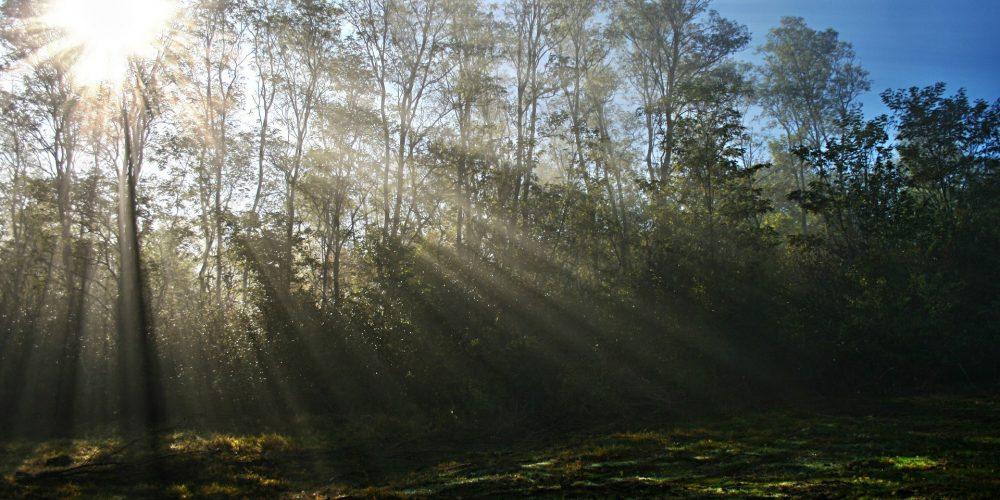 Aprobados los cambios en la política de prevención de incendios y gestión forestal en Galicia
