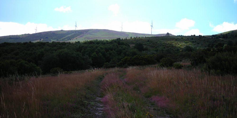 Ayudas para proyectos de ordenación de montes