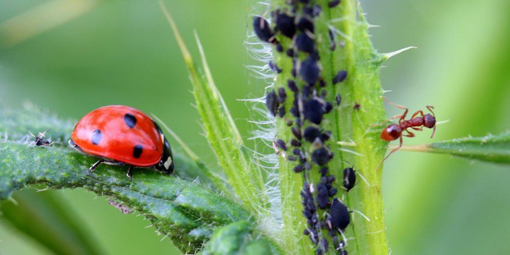 Cómo prevenir la aparición de plagas en el huerto