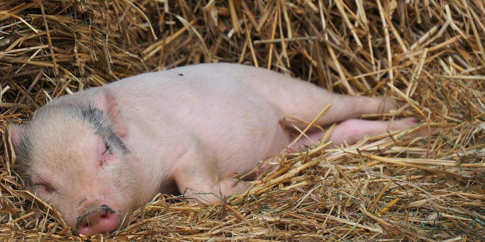 Crece el número de granjas en Galicia