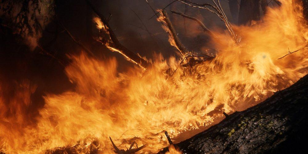 Los propietarios que no cumplan con la normativa forestal pagarán los costes de extinción de incendios
