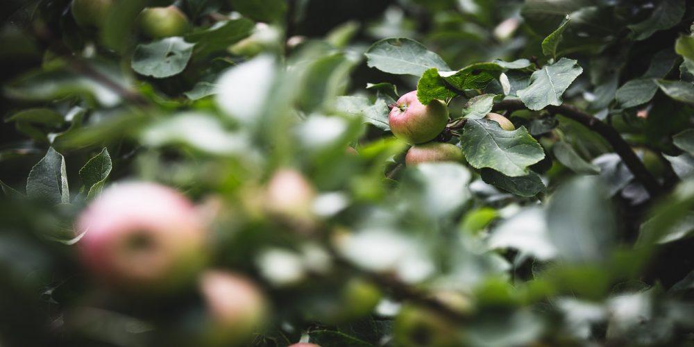 En las superficies de interés ecológico no se podrá utilizar herbicidas o fitosanitarios