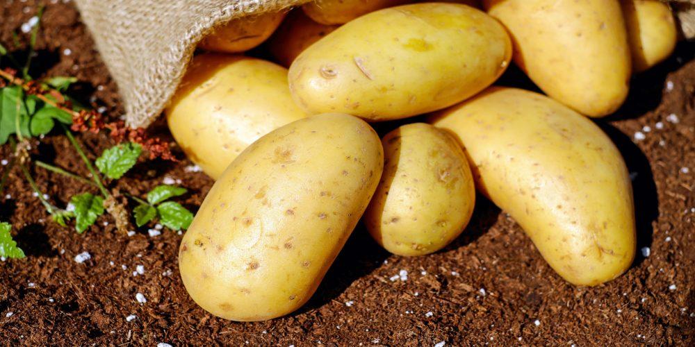 Indemnizaciones por la polilla de la patata y tres plagas vegetales