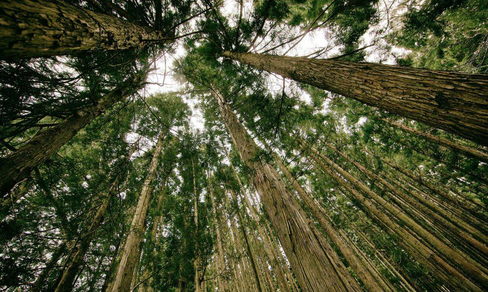 convocado-premio-proyecto-innovador-forestal-1920