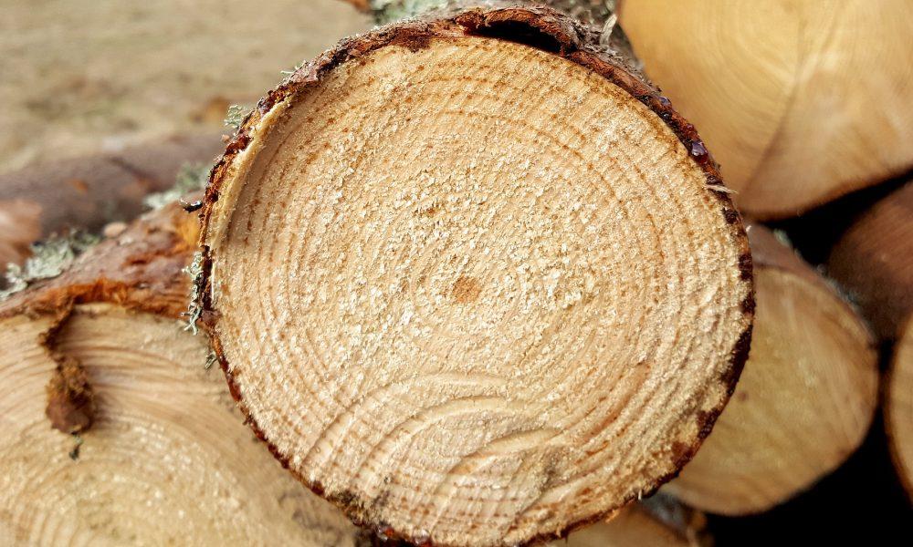 en marcha la agencia gallega de la industria forestal para impulsar la innovación y el empleo en el sector