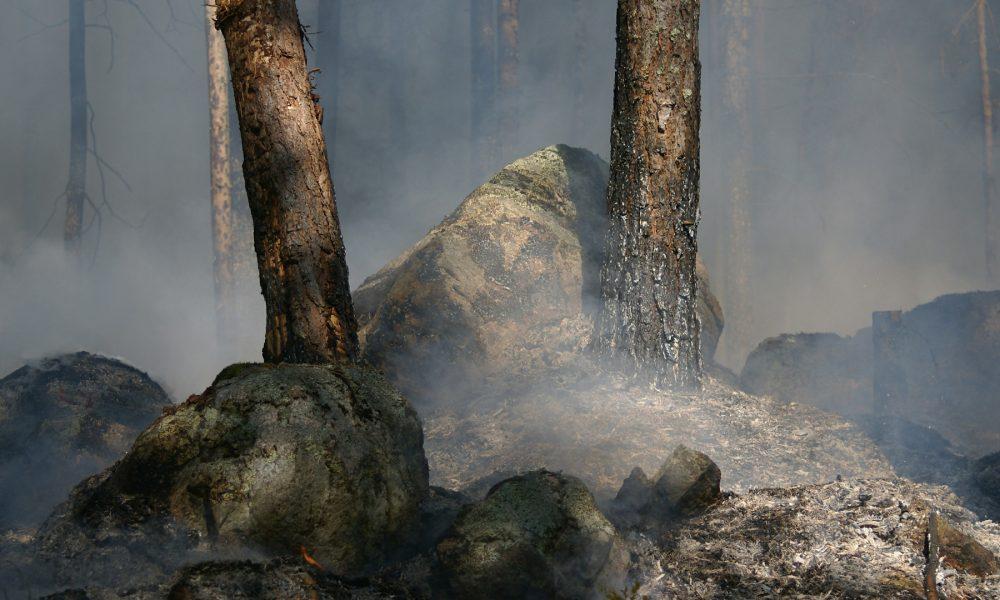 hasta-el-30-de-noviembre-para-solicitar-las-ayudas-por-los-danos-de-los-incendios-1920