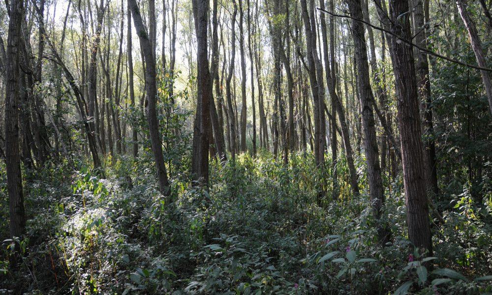 la ley permite recurrir a parados para la limpieza de montes