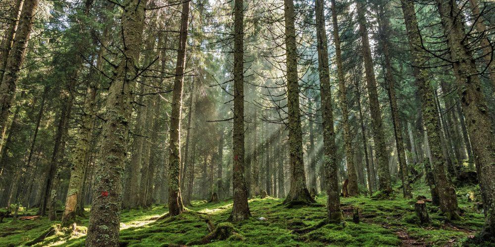 La tasa de tala en Galicia es baja
