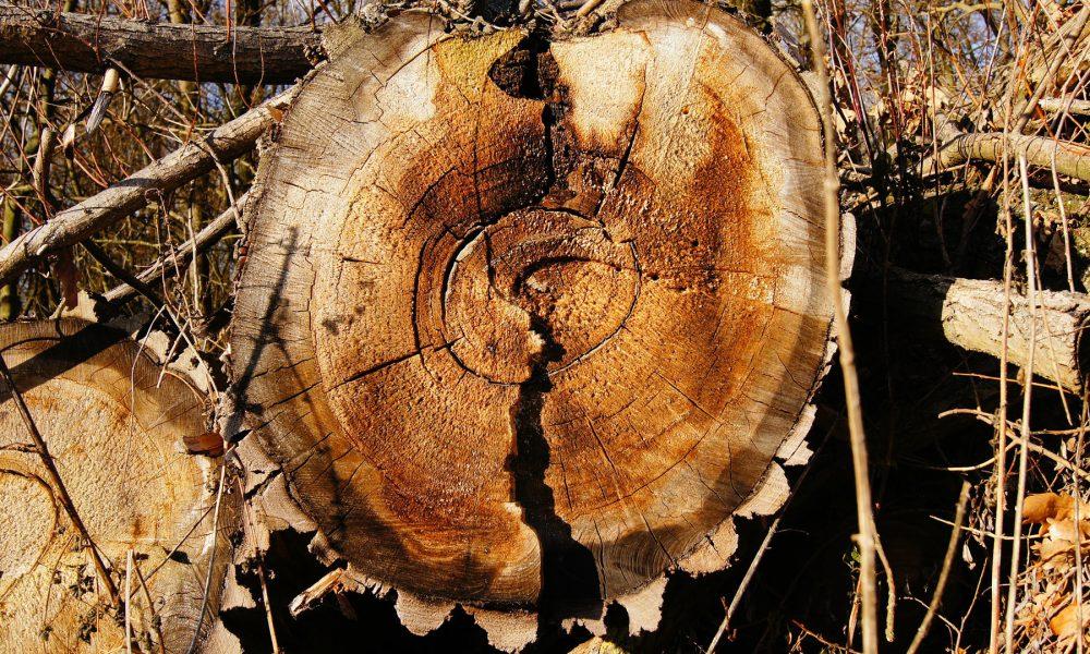 mas-de-tres-millones-de-toneladas-de-madera-afectada-por-los-incendios-1920