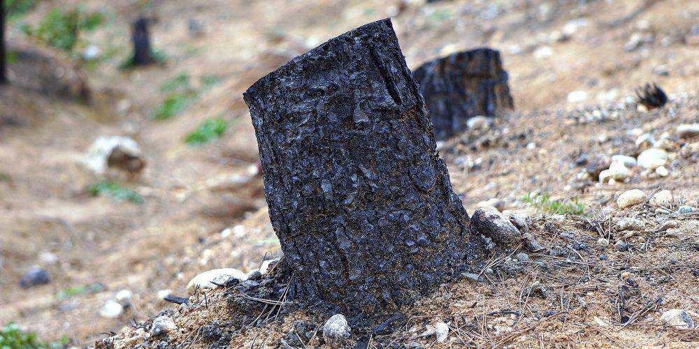 Mayor número de incendios este verano, pero menos superficie quemada en Galicia