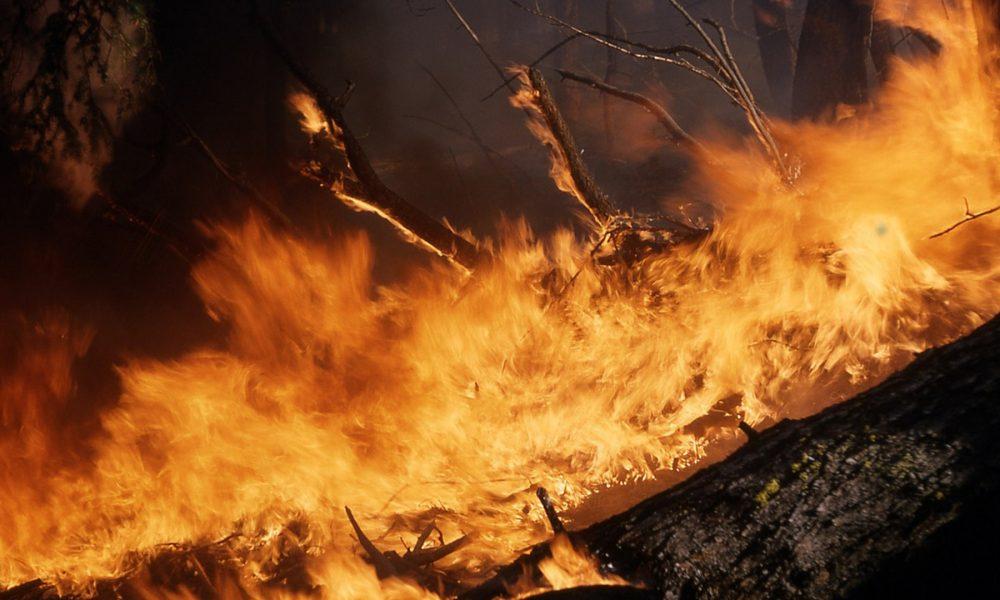propietarios-no-cumplan-normativa-forestal-pagaran-costes-de-extincion-incendios-1920