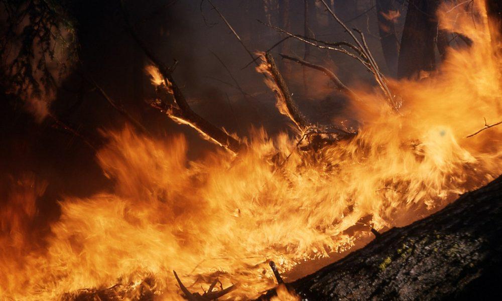 tragedia forestal en galicia: 200 incendios y más de 15000 hectáreas quemadas
