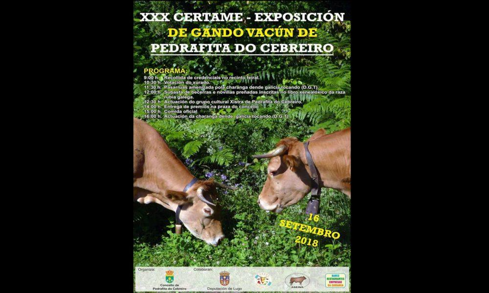 XXX Certame - Exposicion de gando vacun de PEDRAFITA DO CEBREIRO.1920