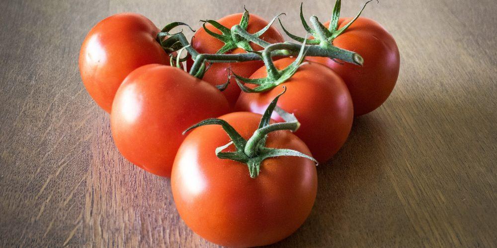 Formación y empleo para jóvenes en el sector agroalimentario con «Emprega Xuventude»
